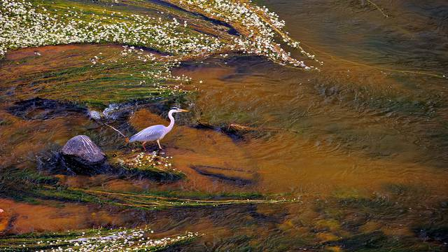 Heron on the Loire © L. de Serres