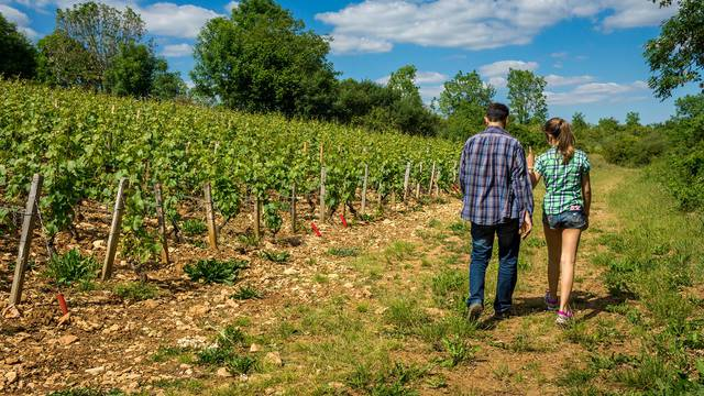 Hiking in the vineyards of Blois-Chambord
