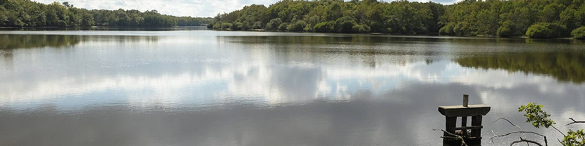 Lake in the Sologne