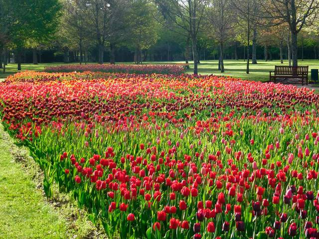 The 100,000 tulips of Cheverny Castle. © OTBC